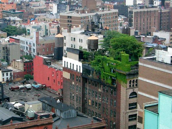 techos-verdes-NYC